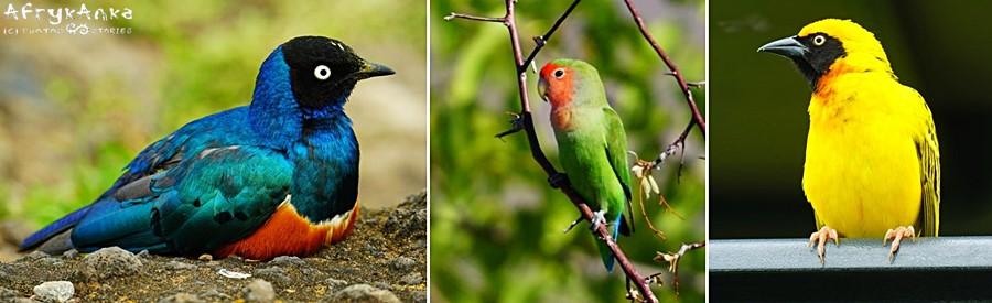 Ptasi świat jest niebywale różnorodny.