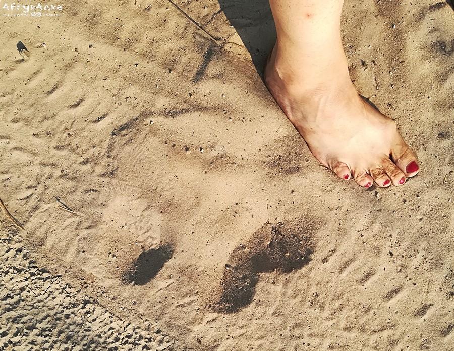 Ślad hipopotama i moja noga do porównania.