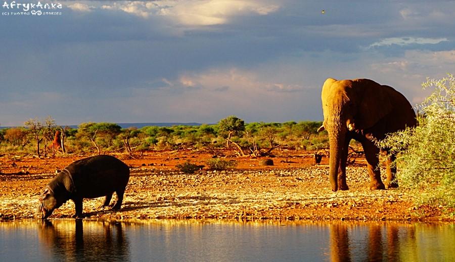 Gdy nad wodę przychodzi słoń...