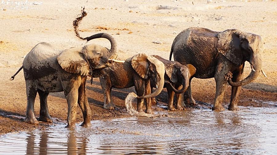 Kąpiel cieszy każdego słonia!