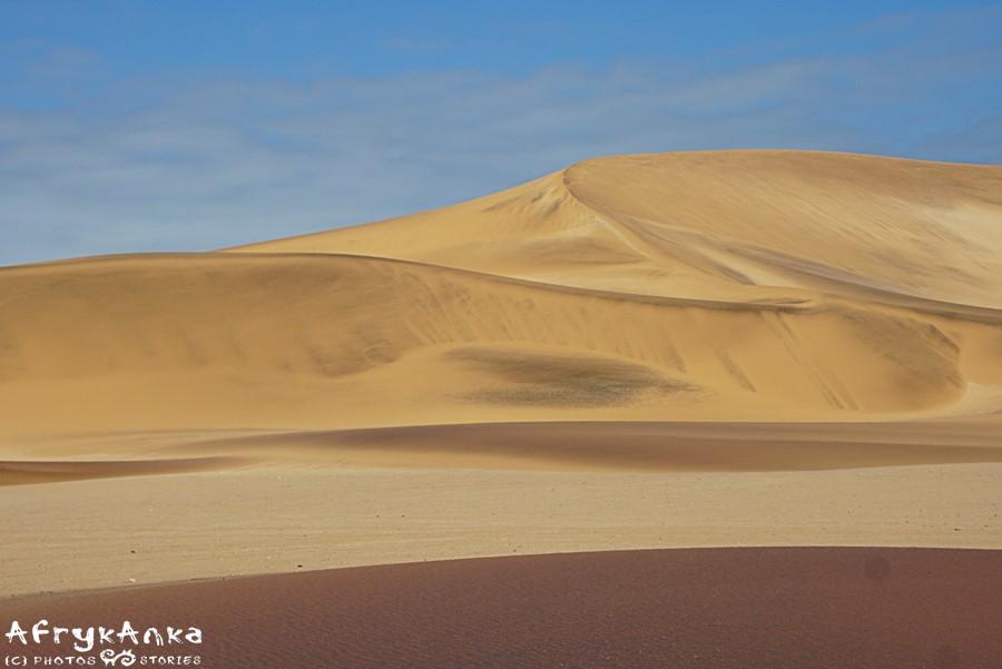 Pustynia nigdy nie jest pusta – trzeba tylko umieć dostrzec tu życie.