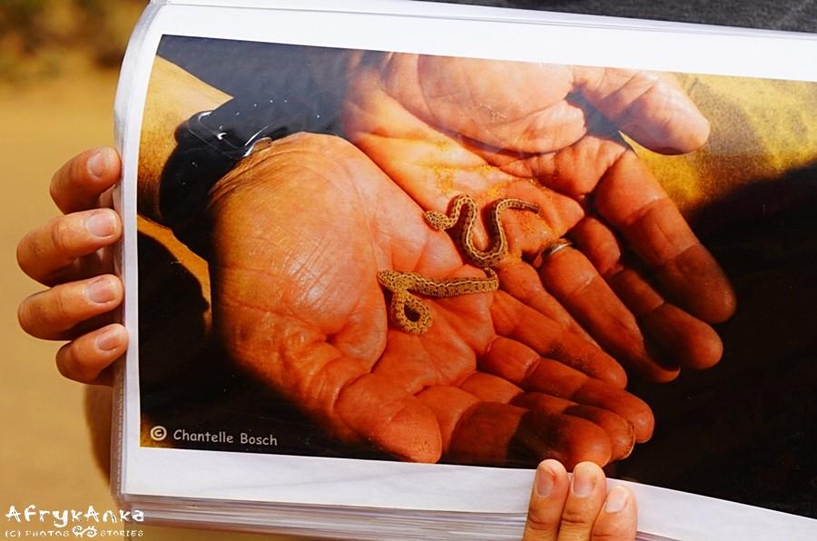 Dwugodzinne żmije w dłoniach Tommy'ego Collarda.