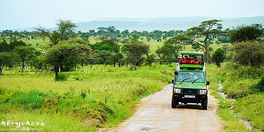 """Słowo """"safari"""" w swahili oznacza """"podróż"""""""