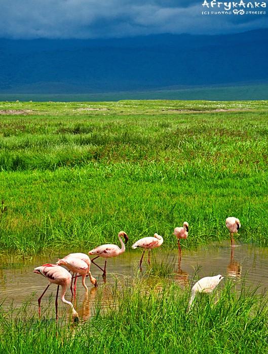 Flamingom burze nie straszne.