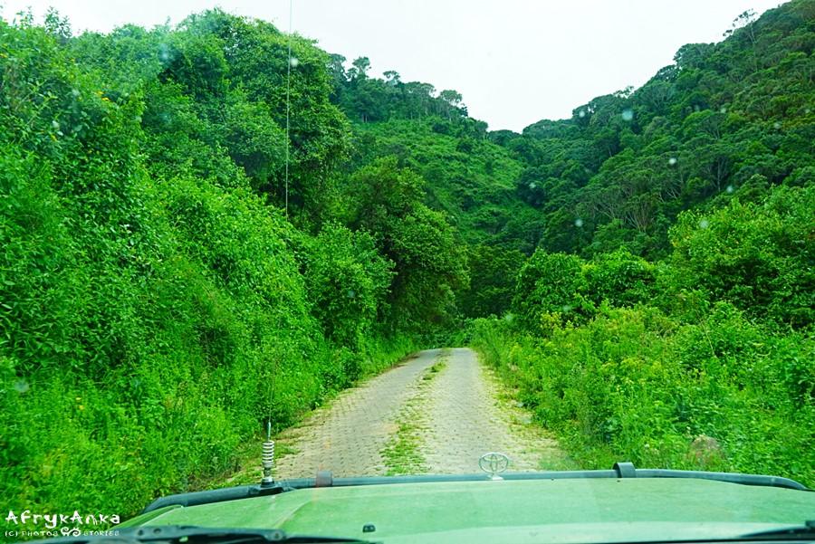 Droga wyjazdowa z krateru widzie wśród lasu deszczowego.