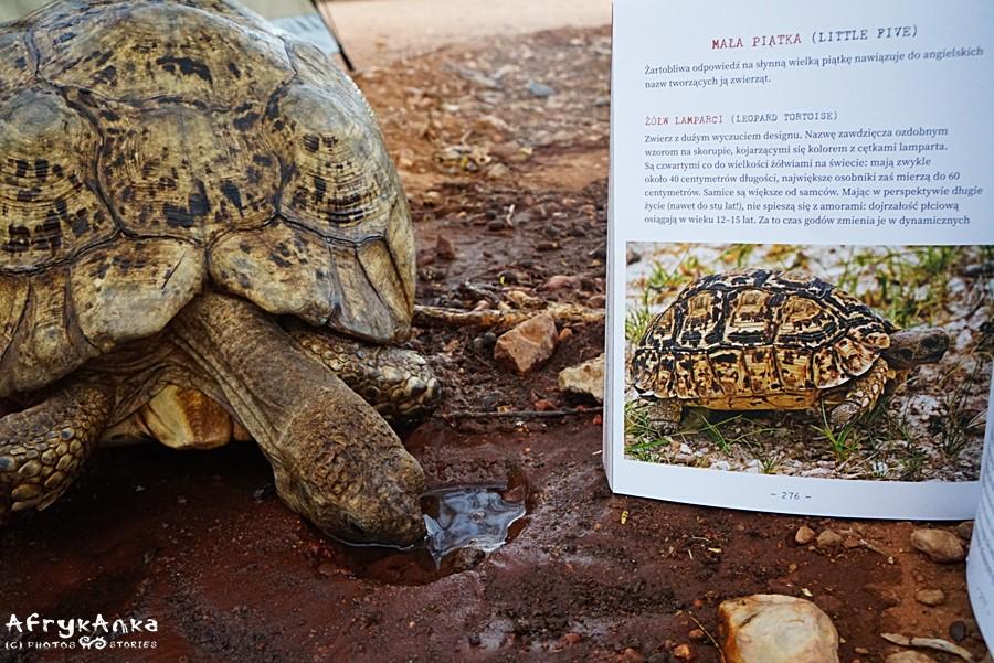 """Mała piątka została przeze mnie opisana w książce """"Namibia. Przez pustynię i busz"""""""