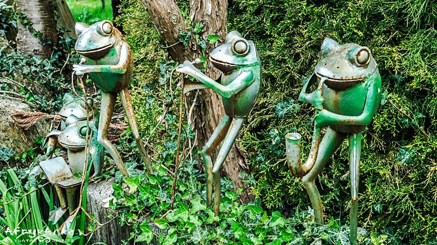 Jest tu nawet orkiestra żab!