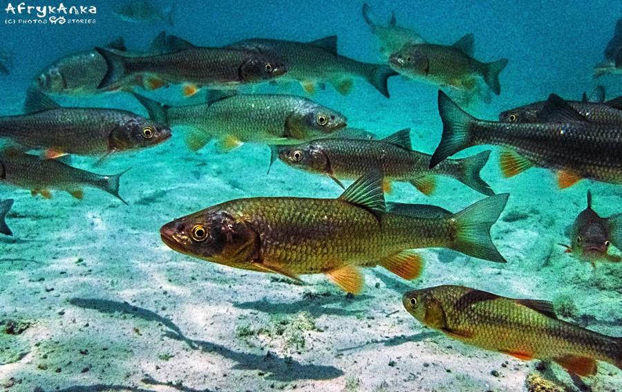 Ryby zdają się unosić w powietrzu.