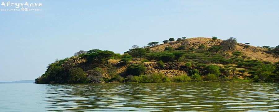 Wyspa bielików afrykańskich i sporej rodziny.