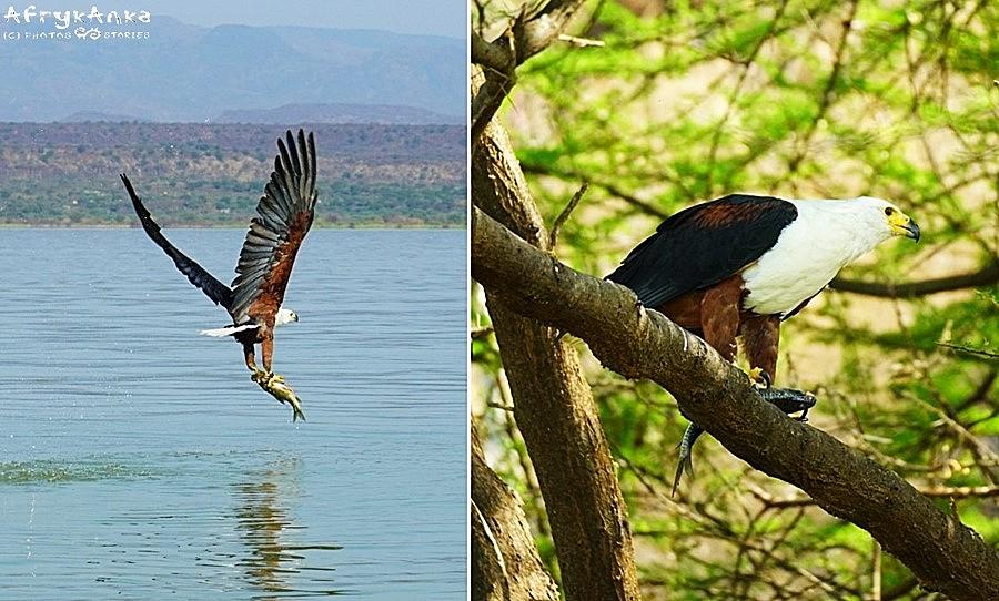 Ptak łapie zdobycz w ułamku sekundy.
