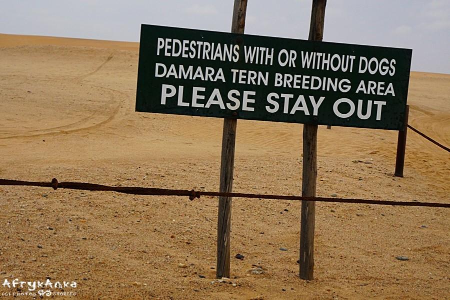 Dla większości ludzi pustynia to tylko piach...