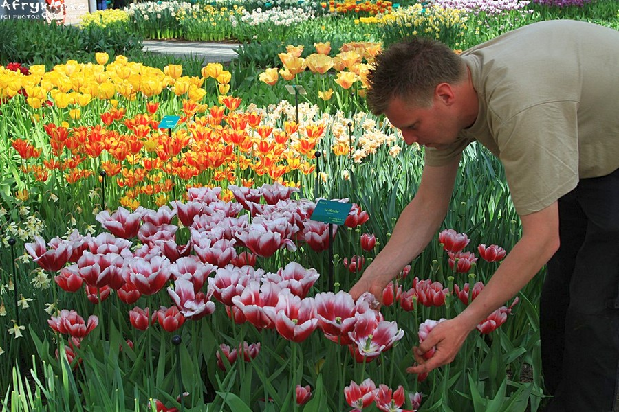 Ogrodnicy mają tu pełne ręce roboty.