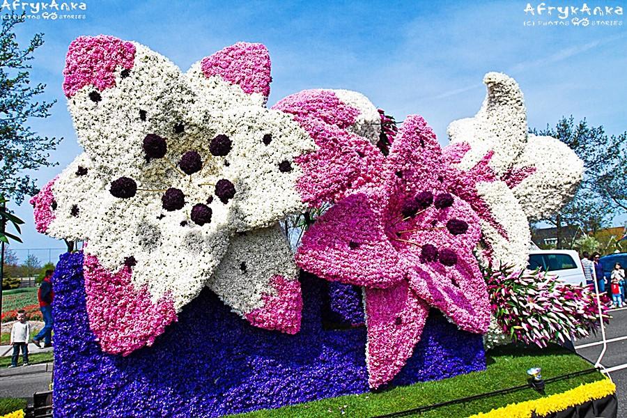 Olbrzymie kwiaty ułożone z tysięcy kwiatów...