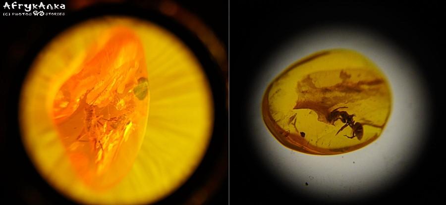Inkluzje: z lewej pasikonik, z prawej mrówka...