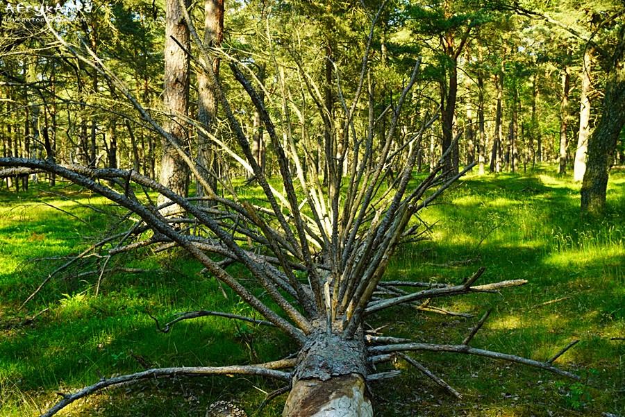 Trasa wiedzie malowniczo przez las.