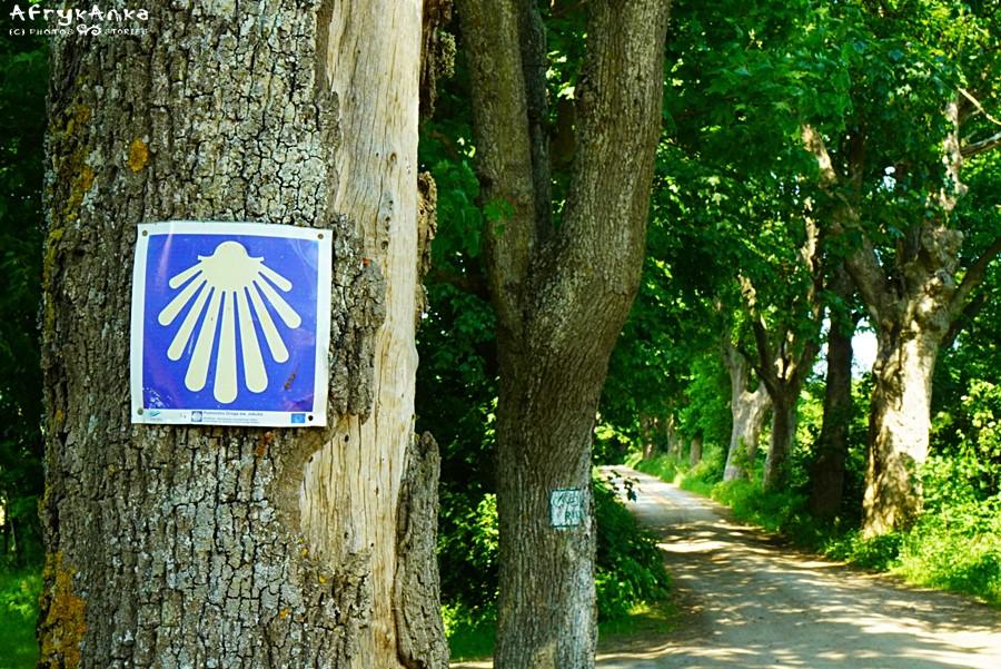 Część trasy prowadzi szlakiem św. Jakuba.