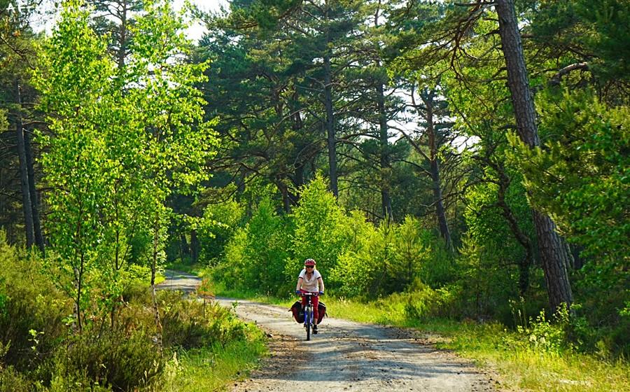 Trasa widzie malowniczo przez las.