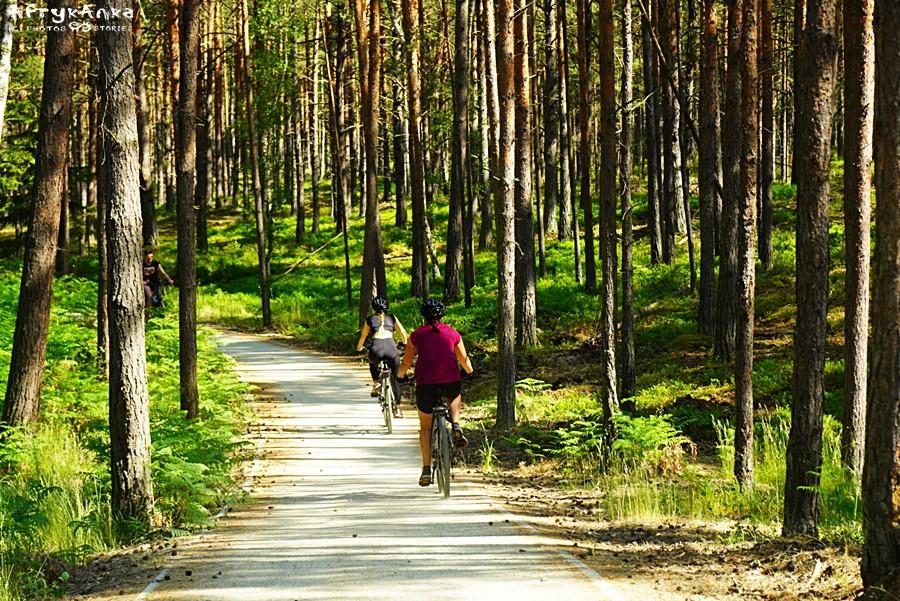 A potem prowadzi przez las (obok drogi dla aut)